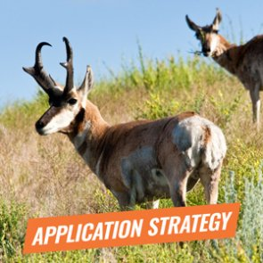 APPLICATION STRATEGY 2018: Arizona Antelope