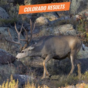 Get your 2018 Colorado deer and antelope results early - but it takes some work