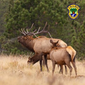 Idaho 2018 deer, elk, antelope and fall bear application deadline extended to June 7
