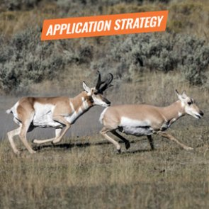APPLICATION STRATEGY 2018: New Mexico Antelope and Exotics
