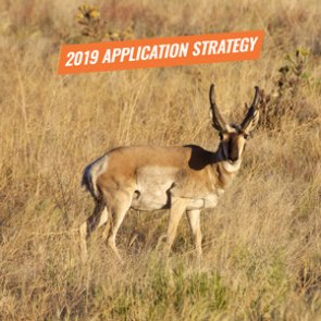 APPLICATION STRATEGY 2019: Arizona Antelope
