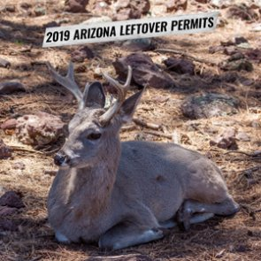 2019 Arizona fall leftover hunting permit list