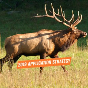 APPLICATION STRATEGY 2019: California Elk and Sheep