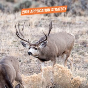 APPLICATION STRATEGY 2019: Colorado Mule Deer