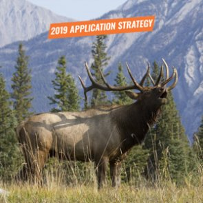 APPLICATION STRATEGY 2019: Idaho Elk