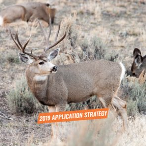 APPLICATION STRATEGY 2019: Idaho Deer