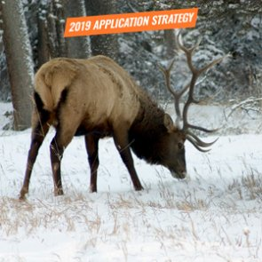 APPLICATION STRATEGY 2019: Montana Elk