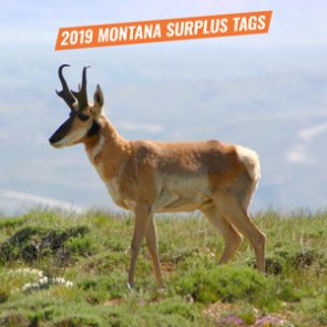 2019 Montana surplus archery antelope licenses, plus antlerless deer and elk tag list