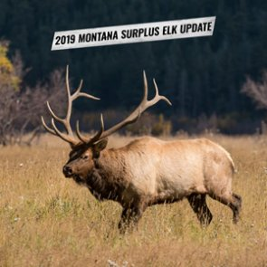 Montana surplus license system crash causes problems for hopeful elk hunters