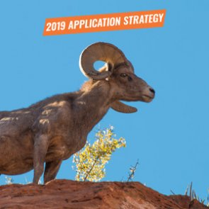 APPLICATION STRATEGY 2019: New Mexico Sheep & Antelope