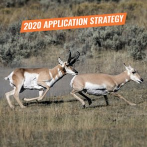 APPLICATION STRATEGY 2020: Arizona Antelope