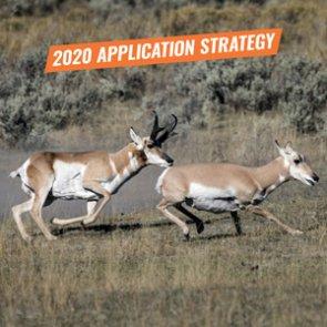APPLICATION STRATEGY 2020: Arizona Antelope