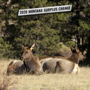 New change to Montana surplus license process for 2020