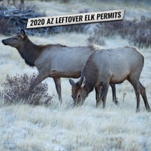2020 Arizona leftover elk hunting permit list