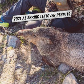 2021 Arizona spring leftover hunting permit list