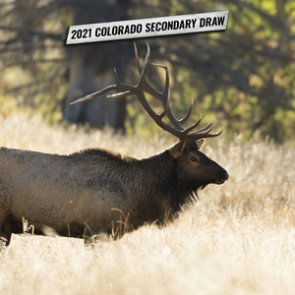 2021 Colorado second draw tag list plus information to help you apply