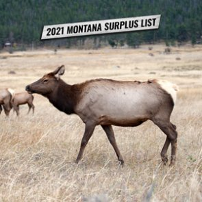 Montana's 2021 surplus license list and information for applying