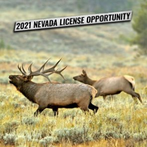Nevada 2021 First Come First First Served license process now live!