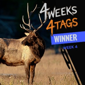 4 Weeks 4 Tags Week 4 Winner