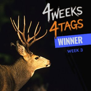 4 Weeks 4 Tags Week 3 Winner