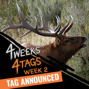 4 Weeks 4 Tags - Week 2 giveaway