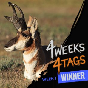 4 Weeks 4 Tags Week 1 Winner