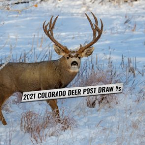 App numbers/point creep after the highly anticipated 2021 Colorado mule deer draw