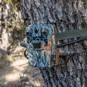 New information on the potential Arizona trail camera ban