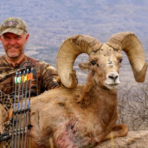 First Texas desert bighorn state record recognized