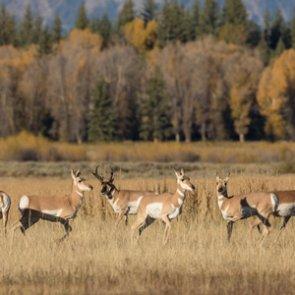 Train decimates antelope herd in Idaho