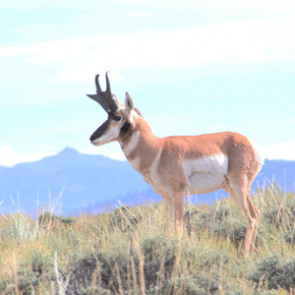 Antelope numbers across 6 states
