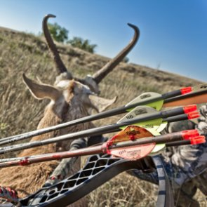 Develop an effective game plan for scouting antelope