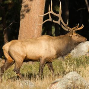 ALERT: AZ elk & antelope draw deadline extended