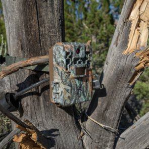 Arizona proposes alternative rule amendment to regulate trail camera use