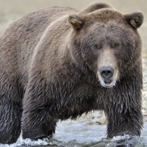 British Columbia announces revised hunting regulations