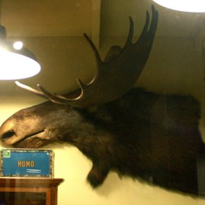 Worst taxidermy
