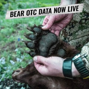 INSIDER Update: Black Bear OTC Hunt Data Now Live!