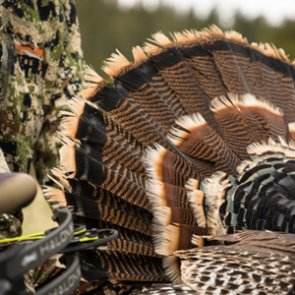 Turkey hunting tips, tricks and tactics for success