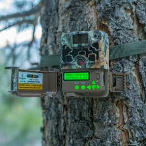 Breakthroughs in trail camera technology and why you need one