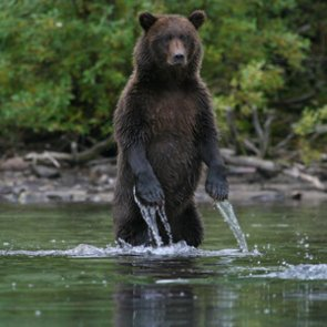 BC ends grizzly hunts indefinitely