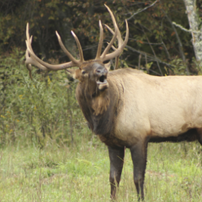 APPLICATION STRATEGY 2015: Utah elk & antelope