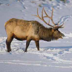 Sportsmen's Act of 2015 opens more land for hunting