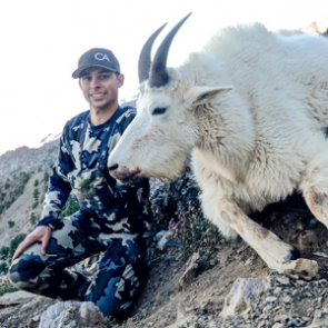 Getting lucky for a mountain goat