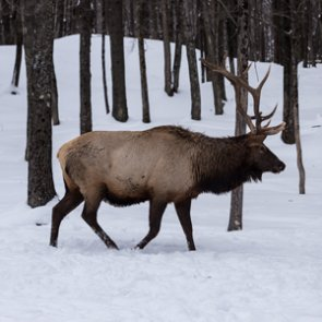 Accidental shooting results in criminal charges for Colorado hunter