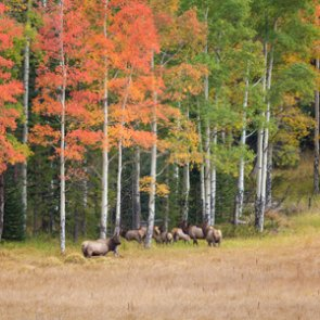 Outdoor recreation impacts elk near Vail, CO