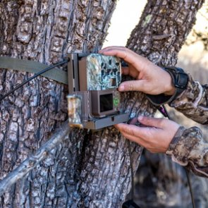 3 common mistakes when running trail cameras