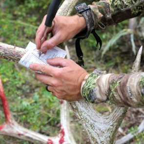 Do you need to be fit to kill elk?