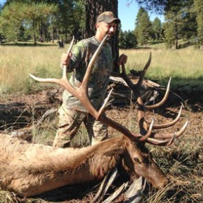Proof that second time's the charm for Arizona elk