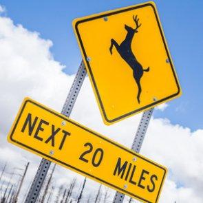 Deer crossings