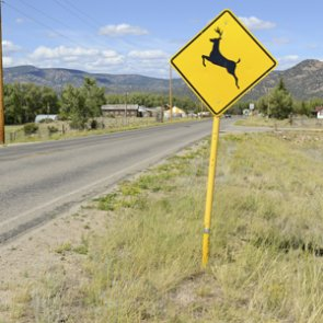 Number of deer collisions increasing